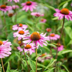 Edible & Medicinal Plants of the Prairies Course July 2019