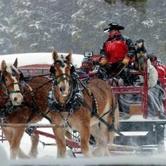 Horse Drawn Caroling Rides 18mths-99yrs