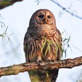 Night Hike Owl Prowl