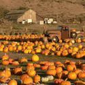 Half Moon Bay Pumpkin Festival