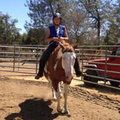 Horse Speak: Equine Assisted Counselling