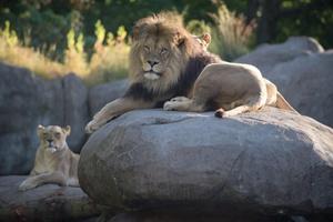 Twilight Tuesday at Oregon Zoo