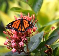 A Butterfly Gardening Workshop