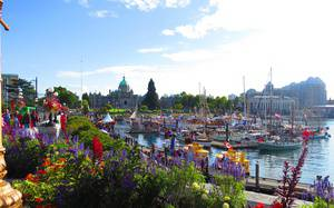 August Guide: Major Events & Festivals in Greater Victoria