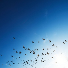 Urban Birding - Spring Migration