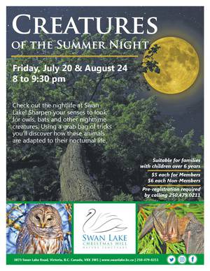 Creatures of the Summer Night