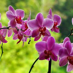 Orchids of the Enchanted Forest Expo
