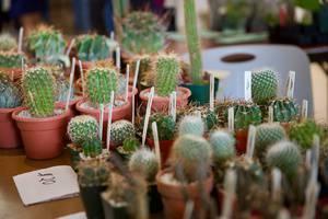 Toronto Cactus & Succulent Club Annual Show & Sale 2019