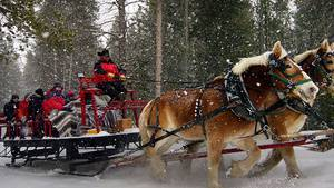 Horse Drawn Sleigh Ride in January 2020