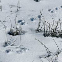 Stories in the Snow - Winter Nature Hike