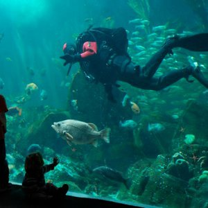 21st Annual Divers' Weekend at the Vancouver Aquarium
