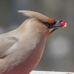 Bird Feeder Fun!