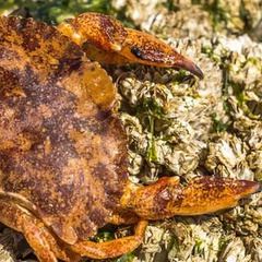 Crabs, Clams, and Other Coastal Critters