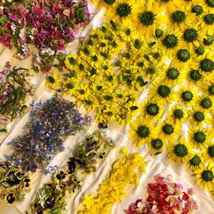 All About Edible Flowers