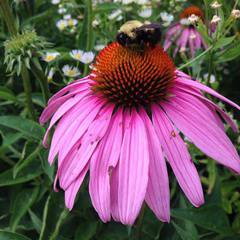 Introduction to Herbalism: weekend course
