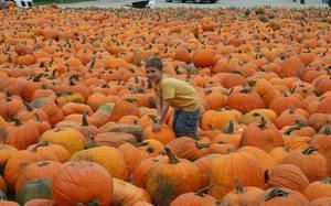 6 Best Pumpkin Patches & Corn Mazes Around Ottawa