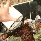 Composting with your Family
