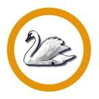 Swan Ping Pong