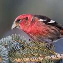 Bird ID Workshop for Novice Birders